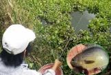 Cao thủ giật cá rô mỏi tay ở miền Tây