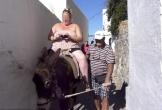 Hy Lạp cấm du khách trên 100 kg cưỡi lừa đi dạo