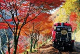 Săn lá đỏ - thú chơi gần nghìn năm tuổi ở Nhật