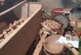 Bộ Công Thương: Khó xử nông, thủy sản ngoại