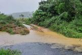 """Quảng Bình: Trại bò Hoà Phát lợi dụng trời mưa xả thải """"bức tử"""" môi trường"""