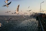 Chơi với hàng nghìn con hải âu ở ngoại ô Bangkok