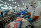 Cá tra vào danh mục đối tượng thủy sản nuôi chủ lực