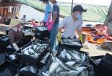 Quảng Bình: Tổ Hợp tác trên biển phát huy hiệu quả