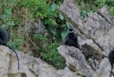 Loại bỏ hơn 102ha mỏ đá để bảo vệ đàn Voọc đen má trắng quý hiếm