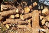 Bắt thêm một đối tượng đưa hối lộ cho Chủ tịch xã để phá rừng