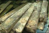 Quảng Bình: Bắt vụ lâm tặc khai thác gỗ lậu lớn nhất từ trước đến nay