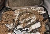 Khách Trung Quốc mang tổ kiến 5 kg lên máy bay về ngâm rượu