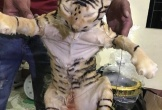 Phát hiện hai con hổ trên xe khách Bắc - Nam