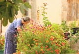 Vườn hoa nhỏ đong đầy ý nghĩa