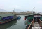 Nguyên nhân nào khiến cá, mực chết tại cảng Vũng Áng?