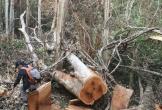 Bộ Công an bắt vụ phá rừng quy mô lớn trong vườn quốc gia