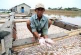 80 hộ dân trắng tay khi 1.500 tấn cá chết trên sông La Ngà