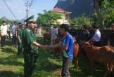 Tặng 50 con bò giống cho người nghèo ở khu vực biên giới tỉnh Quảng Bình
