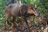 Chụp được ảnh 2 cá thể động vật quý hiếm tại Quảng Nam