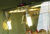 Trộm khoét mái hiên tiệm vàng, trộm hơn 1,5 tỷ đồng