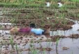 Người phụ nữ bắt ốc tử vong giữa cánh đồng