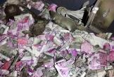 Hy hữu chuột chui vào máy ATM cắn nát 432 triệu đồng