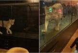 Quán cafe nhốt sư tử trong lồng kính chật hẹp để mua vui cho khách