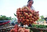 Gần 11.000 tấn vải thiều Bắc Giang xuất ngoại bằng máy bay