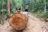 Nhiều cán bộ bị kỉ luật do để xảy ra 2 vụ phá rừng nghiêm trọng