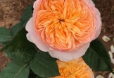Hà Nội sẽ có công viên hoa hồng lớn nhất Việt Nam