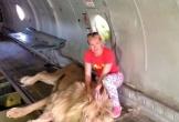 Nữ du khách bị sư tử vồ ngay sau khi chụp ảnh