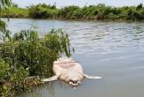 Mexico điều tra nguyên nhân bí ẩn khiến bò biển chết hàng loạt