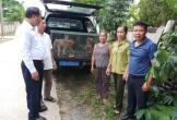 Quảng Bình: Người dân tự nguyện giao nộp 02 cá thể khỉ đuôi lợn quý, hiếm