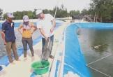 Hiệu quả mô hình cá chạch bùn trên ao lót bạt tại Quảng Bình