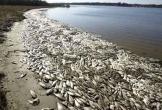 Huyện Bố Trạch thu hồi tiền đền bù sự cố môi trường biển do chi sai
