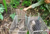 Thả 11 cá thể động vật hoang dã về môi trường tự nhiên