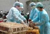 Thủ tướng Chính phủ phê duyệt Kế hoạch quốc gia phòng, chống bệnh cúm gia cầm
