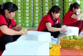 Xoài Việt Nam có thị trường xuất khẩu thứ 40