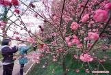 Hoa đào mùa xuân đẹp như tranh ở Trung Quốc