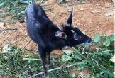 Quảng Bình: Người dân tự nguyện giao nộp động vật hoang dã quý hiếm