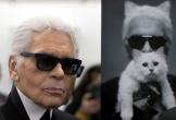 Mèo của NTK Karl Lagerfeld có thể trở thành mèo giàu nhất hành tinh