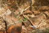 Phá rừng tại Phong Nha Kẻ Bàng: Ai chịu trách nhiệm?