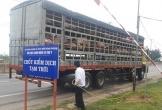 Quảng Bình lập chốt kiểm dịch động vật để ngăn dịch tả lợn Châu Phi