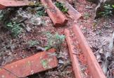 Vụ phá rừng tại VQG Phong Nha – Kẻ Bàng: Trách nhiệm thuộc về Ban quản lý Vườn
