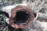 Tiết lộ bất ngờ về chân tướng nhóm lâm tặc phá rừng gỗ quý ở Phong Nha - Kẻ Bàng
