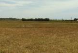 Nhiều đồng ruộng phải bỏ hoang vì thiếu nước ở Quảng Bình