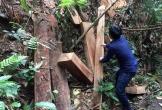 Xử lý nghiêm trách nhiệm trong các vụ phá rừng