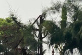 Cách chức hiệu trưởng vụ nam sinh tử vong khi bị điều đi cắt cây