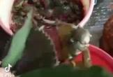 Thanh niên khoe con cua có phần bụng