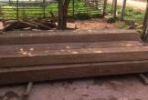 Xử lý 24 vụ vi phạm lâm luật trong dịp Tết, thu giữ nhiều gỗ lậu tại Quảng Bình
