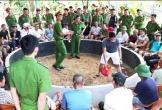Triệt xóa nhóm đánh bạc bằng hình thức đá gà, tạm giữ 34 đối tượng