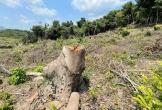 Chối bỏ trách nhiệm khi rừng phòng hộ bị tàn phá